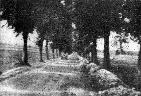 Choroszcz - aleja